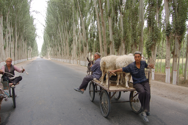 poplar-lines road to Hotan