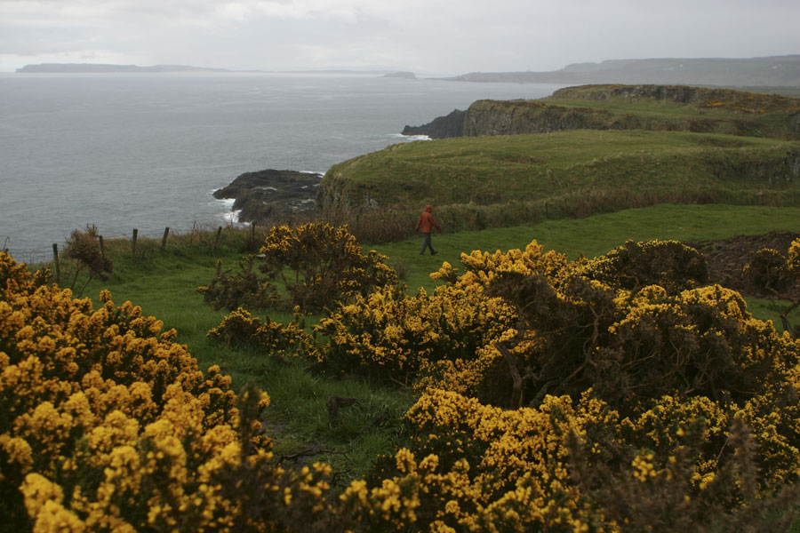 Flowers along the coast of Antrim I
