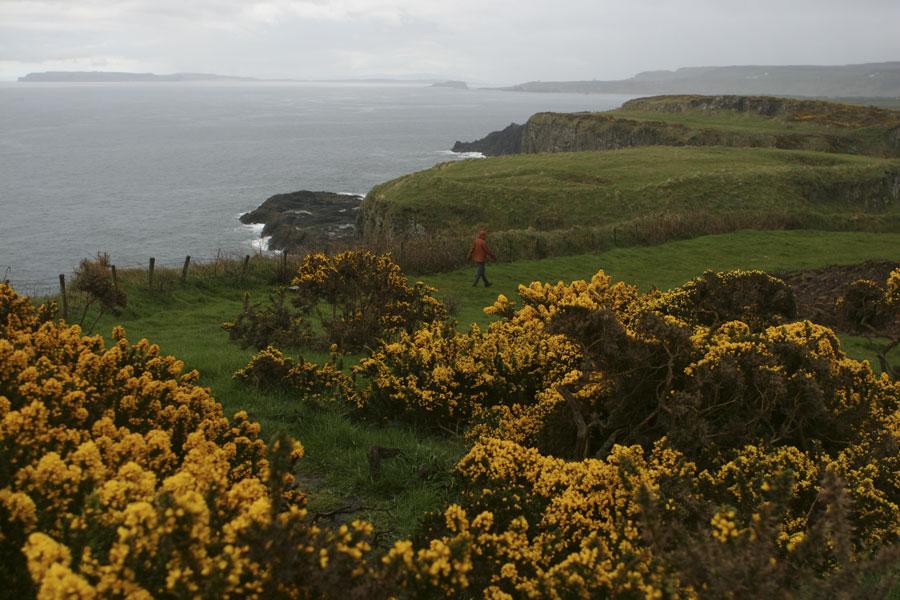 Flowers along the coast of Antrim Ireland